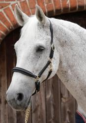 Padded Leather Head Collar